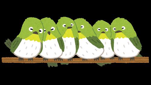 bird_mejiro_oshi
